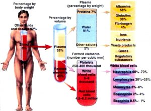 Chemical composition of your body